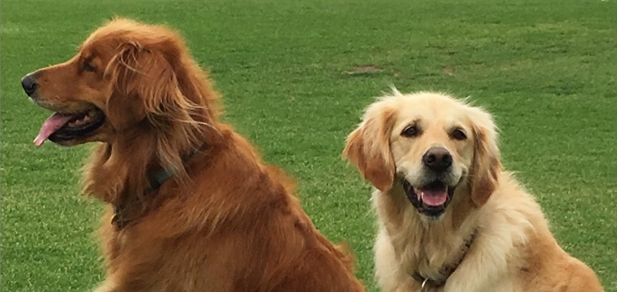 Maribyrnong City Council's Pet Expo is back again thisSunday