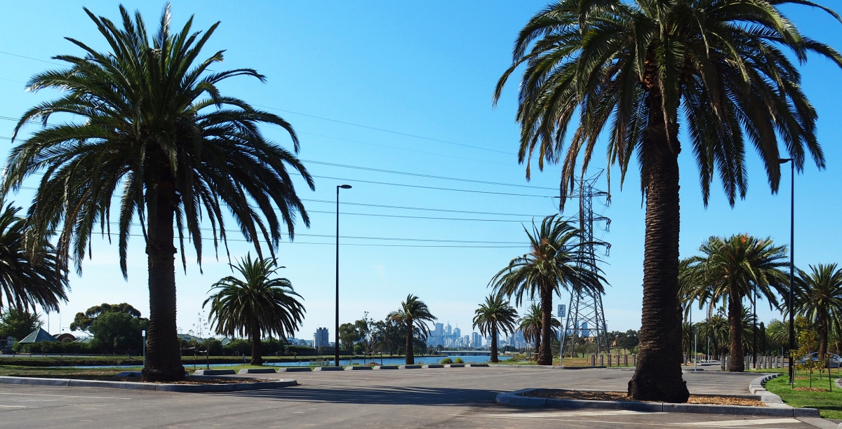 Palms have new home in FootscrayPark