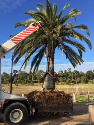 Palm2 with crane.jpg